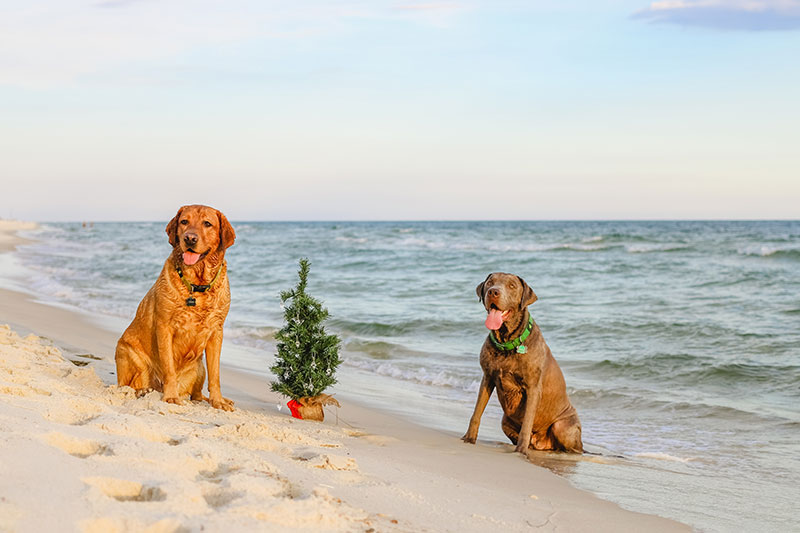 Merry Christmas From The Beach! – Fort Morgan Photographer
